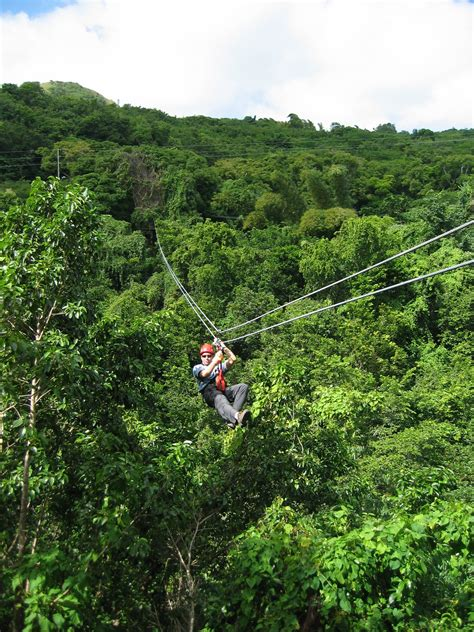 canapé tours antiguan forest canopy tour annual tree safety inspection