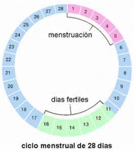 Ciclo Menstrual Calendario Calendario Ovulaci 243 N Embarazo Demedicina