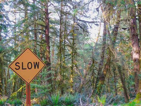 rainforest decke westk 252 ste usa verraten ihre tipps takly on