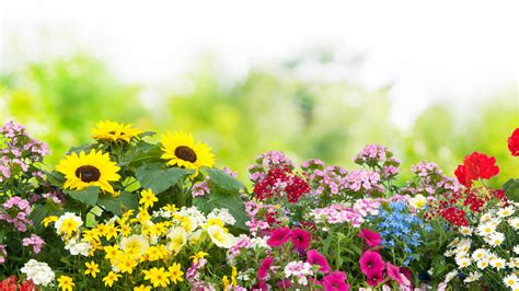 Garten Blumen by Die Beliebtesten Gartenblumen Im Fr 252 Hling Sommer Herbst