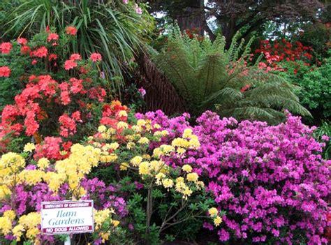 Bright Garden Flowers Azaleas Type Of Flowers Type Of Flowers Wallpaper