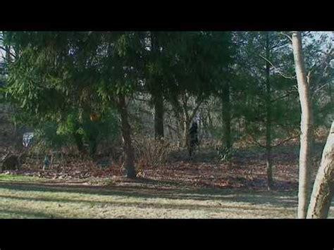 bigfootsasquatch real footage astonishing