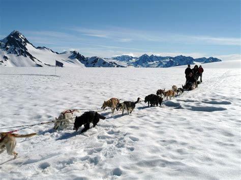 alaska list dogs 17 best images about seward alaska on alaska travel veterinarians and