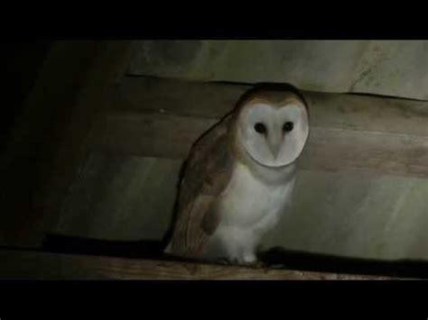 Burung Hantu Owl Ukiran Kayu 1 Set 3 Pcs Asli Handmade owl search tyto alba