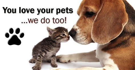 Pet Friendly Appartments by Luxury Travel With Your Furriest Friend Pet Friendly Luxury Hotels Colorado Hotel And Lodging