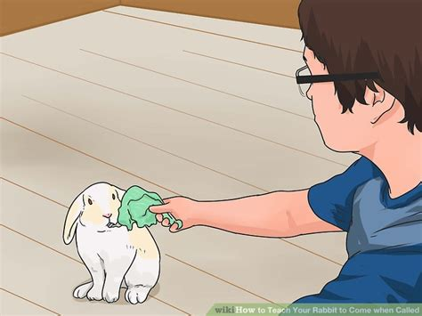 how to an to come when called how to teach your rabbit to come when called 11 steps