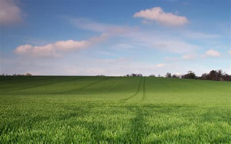 green landscape 6953 2560 x 1600 wallpaperlayer