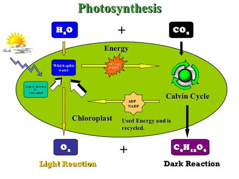 what is the function of a light dependent resistor what is the function of a light dependent resistor 28 images plants and photosynthesis ppt