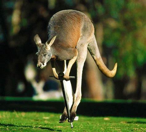 hilarious photoshopped animals  pics