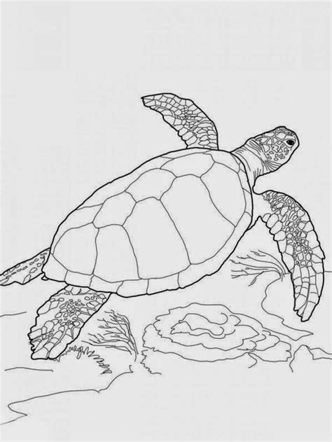 Coloring Page Sea Turtle by Free Sea Turtles Coloring Pages