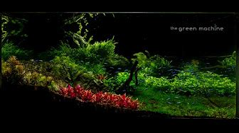 Green Machine Aquascape by Aquascapes By The Green Machine