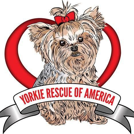 yorkie rescue southern california yorkie rescue of america home
