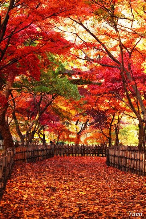 autumn garden best 25 autumn garden ideas on diy candles