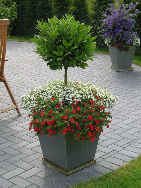garten ideen kiel k 252 belbepflanzung f 252 r terrasse und balkon