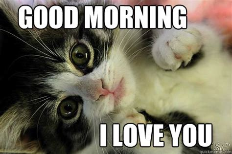 I Love You Meme Funny - 99 best good morning memes cute funny beautiful