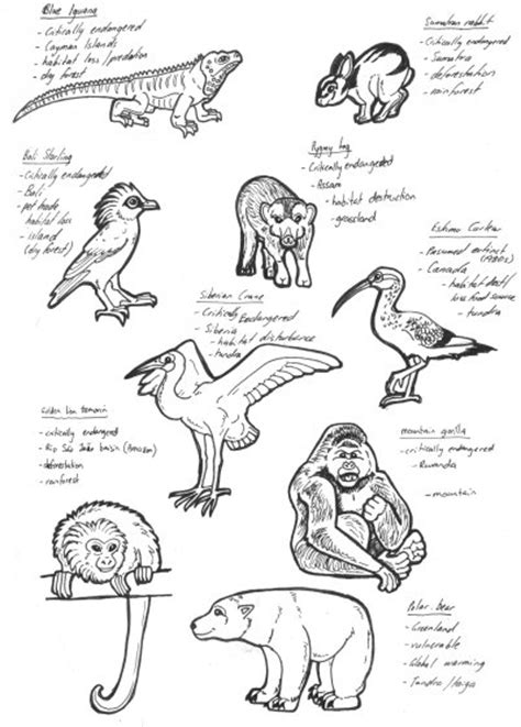 coloring pages endangered animals endangered animals pt 2 by lemurkat on deviantart