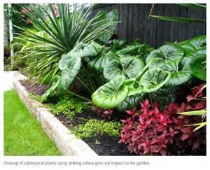 17 best ideas about tropical garden design on pinterest tropical gardens tropical backyard
