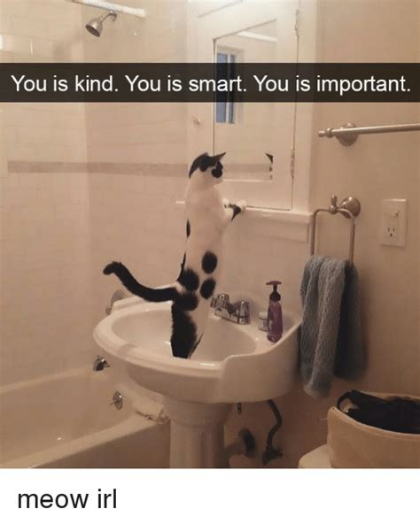 Your Is you is you is smart you is important meow irl cat