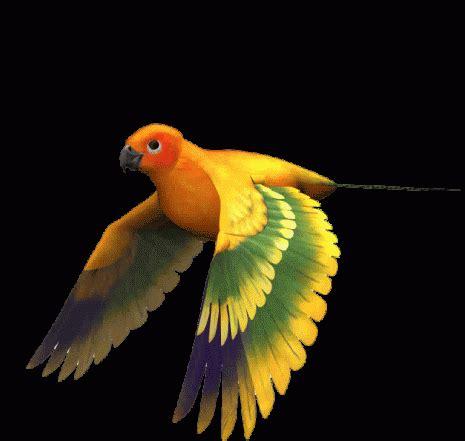 imagenes para whatsapp en movimiento im 225 genes con gifs de p 225 jaros p 225 jaros volando para