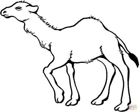 camel coloring page wallpaper download cucumberpress com