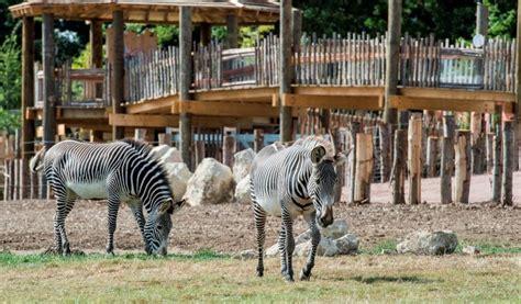 discount vouchers edinburgh zoo marwell zoo discount voucher vouchers lets go with the