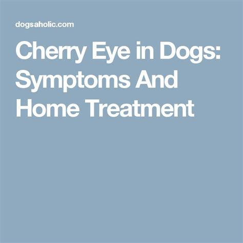 what is cherry eye in dogs 518 best pets images on behavior care and amazing dogs