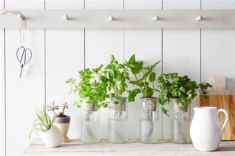 tips tools  starting  indoor garden