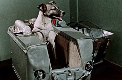 laika the in space 10 tragic facts about laika the in space listverse
