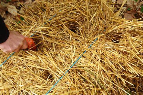 Riesige Pilze Im Garten by Mit Wasser Und Stroh