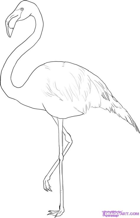 drawing template flamingo outline how to draw a greater flamingo step 5