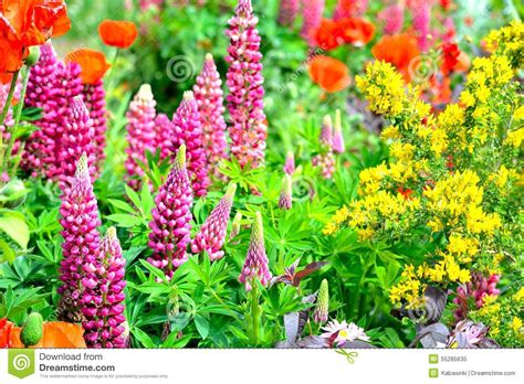 cottage garden flowers uk cottage garden flowers background stock photo image