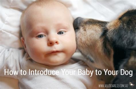 how to introduce to baby how to introduce your baby to your