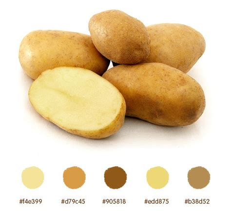 what color are sweet potatoes 73 best color palettes images on color