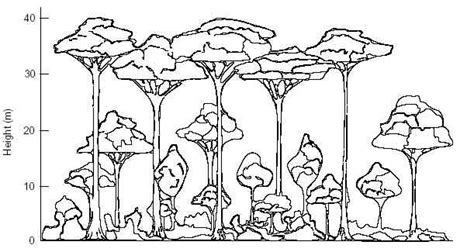 rainforest tree template layers rainforest trees coloring pages sketch coloring page