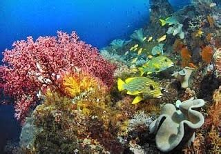 jenis jenis terumbu karang laut akuarium ikan hias