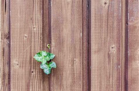 Kaminofen Direkt An Die Wand Stellen by Kaminofen An Der Holzwand Aufstellen Eine Gute Idee