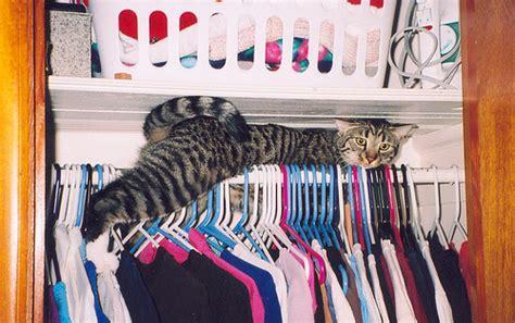 Cats Closet by Closet Cat Flickr Photo
