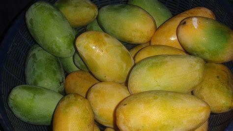 peak season   philippines  popular fruits