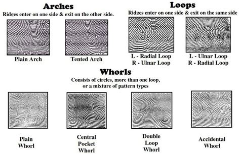 print pattern types 3 fundamental principles of fingerprints