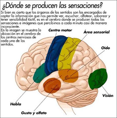 Imagenes De Umbrales Sensoriales | umbral sensorial