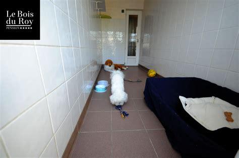 chambre pour chien chambre pour chien chaios com