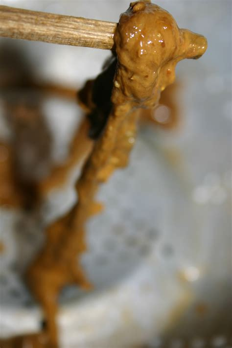 Larvae In Human Stool by Tapeworm Eggs Or Larvae Exposed1 On Curezone Image Gallery