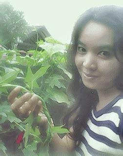 Paket Hemat Pot Cantik Jj Hidroponik griya hidroponikku aneka benih sayuran harga 3ribu