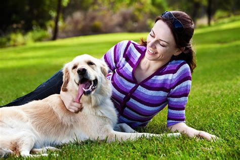 places that allow dogs 9 surprising pet friendly places to take your