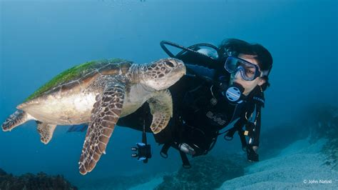 dive byron bay sundive byron bay can get you to julian rocks