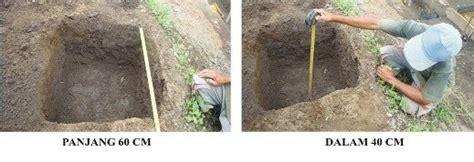 Pala Sabuk P W Garut cara budidaya cara budidaya pohon jabon