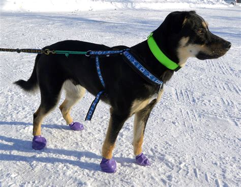 dogs in boots product review pawz boots