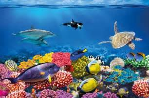 Underwater Wall Mural Undersea Coral Reef Photo Wall Paper Will Turn Your Wall