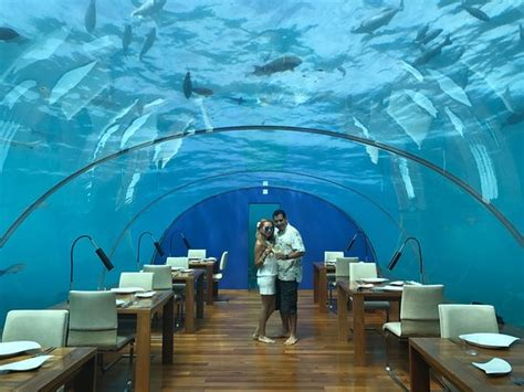 ithaa undersea restaurant prices photo0 jpg picture of ithaa undersea restaurant rangali