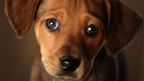 looking for puppies dogs feel no shame despite the look technology science cbc news